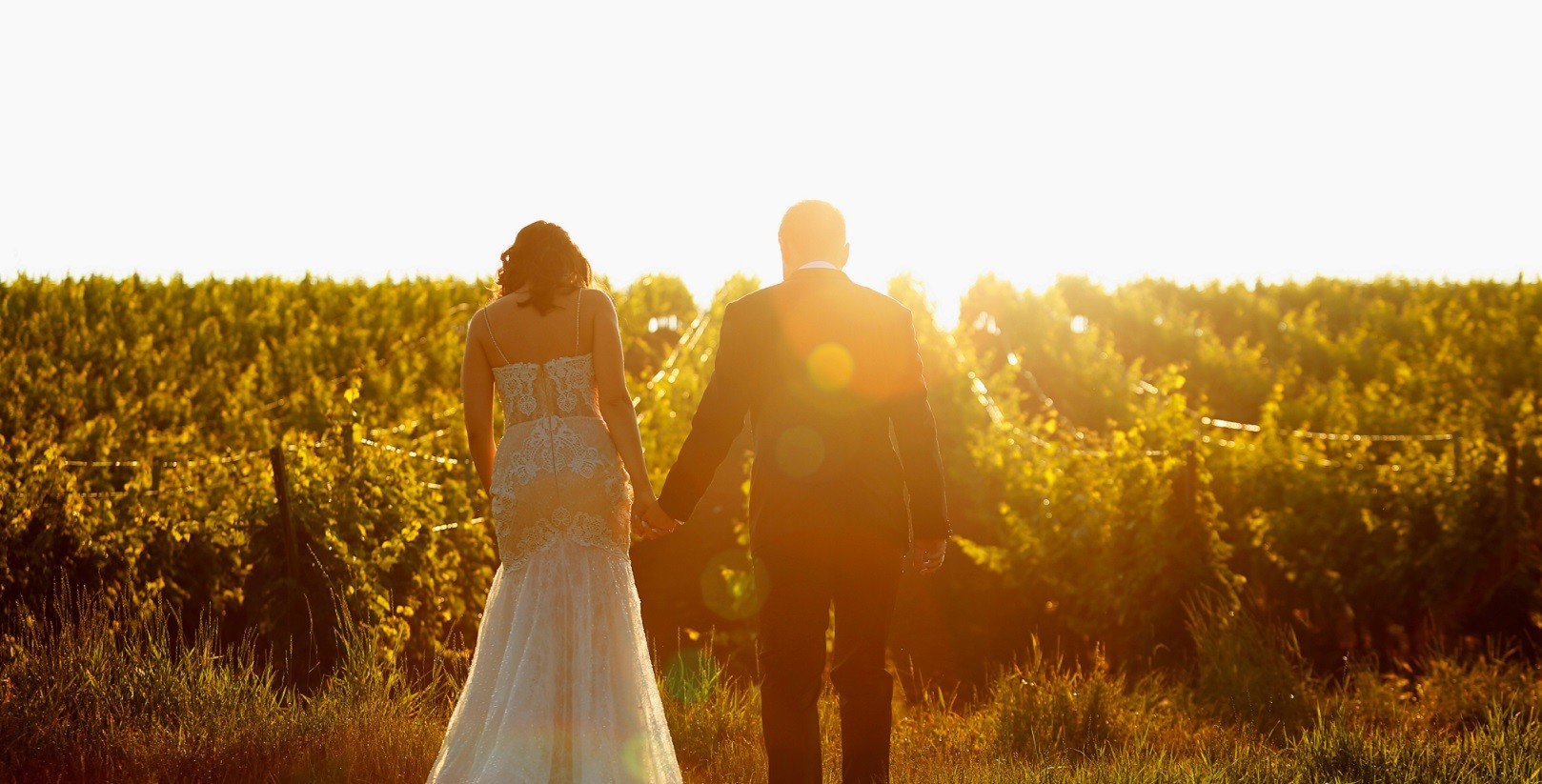 Beautiful wedding couple walking in vineyard at sunrise