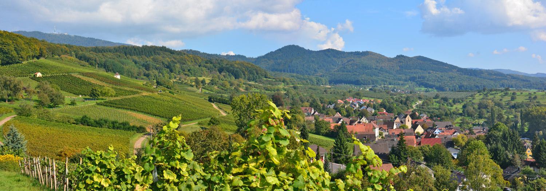 Panorama Feldberg